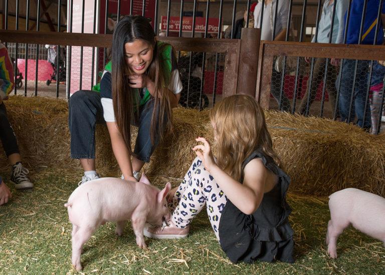 Perth Royal Show Volunteer Animal Nursery